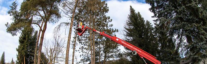 Baumpflege mit der Hocharbeitsbühne